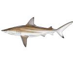 Shark Fishing Charters in Hilton Head, SC