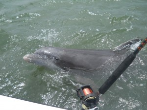 Hilton Head Dolphin Tours - Nature and Photo Charters