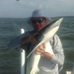Hilton Head Shark