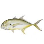 Jack fishing charters in Hilton Head, SC