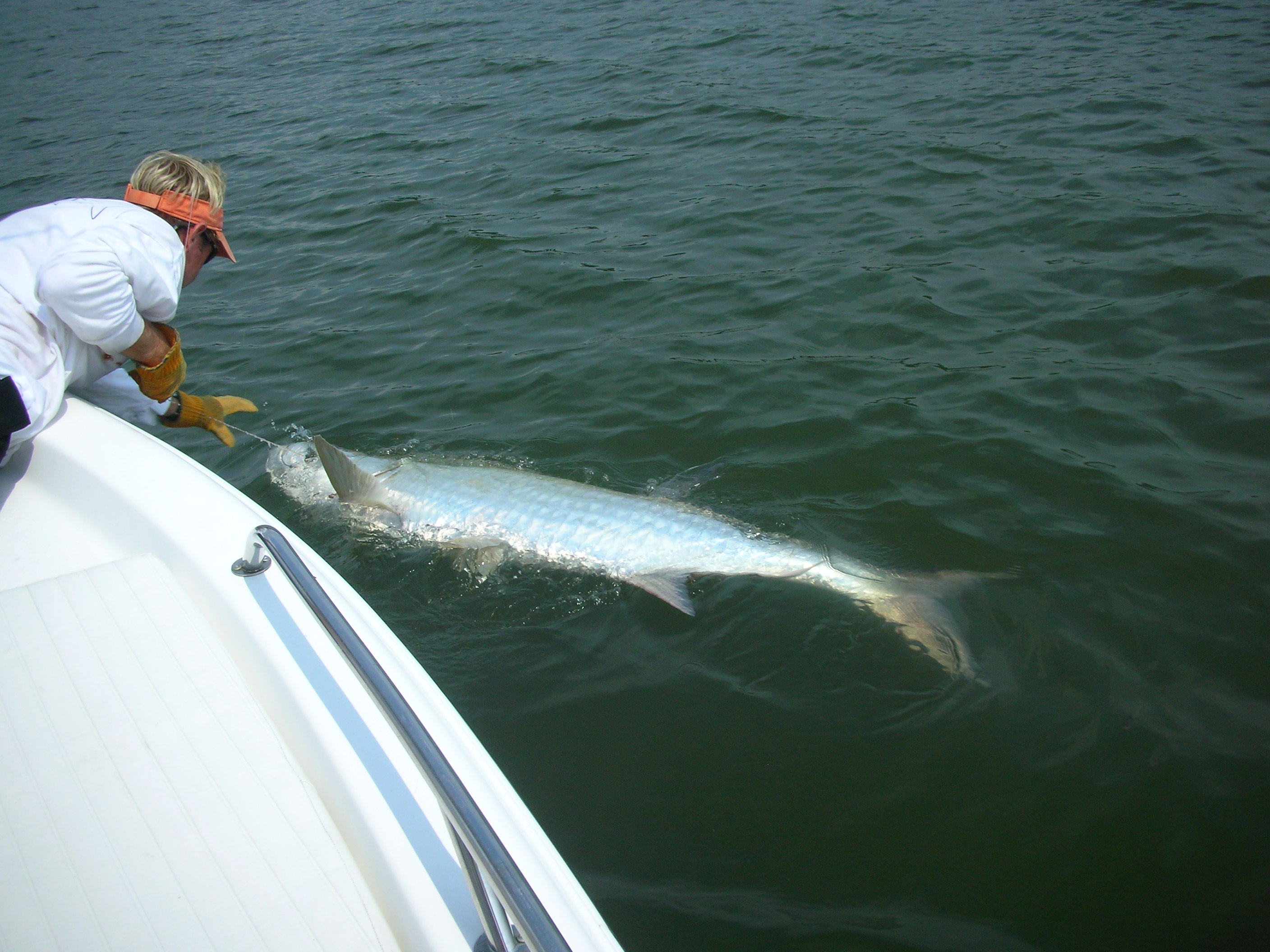 Tarpon fishing charters in hilton head island south for South carolina fishing