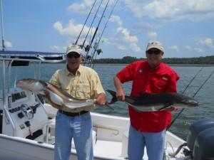 Hilton Head Cobia Fishing