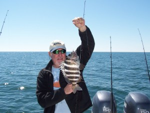 hilton head sheepshead charters