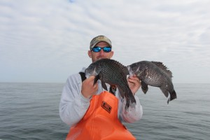 Hilton Head Black Sea Bass