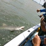 Hilton Head Shark Fishing
